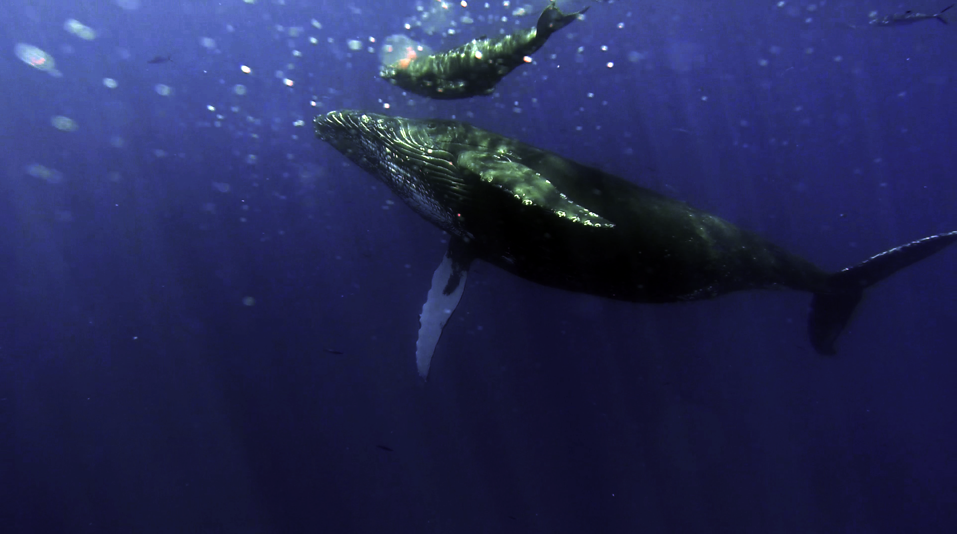 whales01