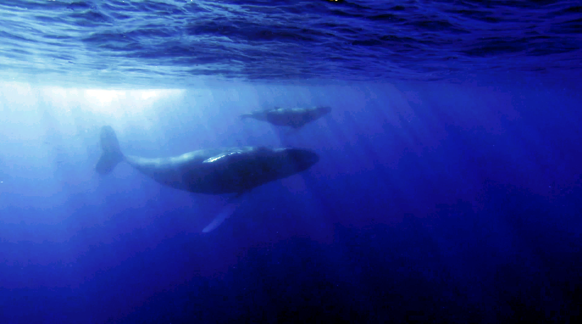 whales03