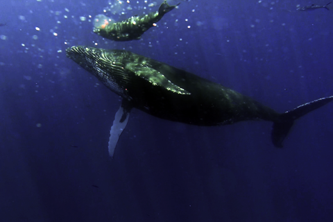 whales_small-1.png